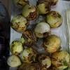 新たまねぎは生で食すのが一番!収穫祭のその後・・・