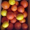 万能柑橘酢 酢橙(ダイダイ)