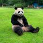 """""""ほぼ本物""""のパンダのレンタルがスタート!!『特殊造型スタジオ ゼペット』の技術の結晶がついにカタチに!!"""