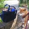 お散歩バッグを新調
