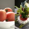 食に関する販売促進  〜コラボによるレシピ開発〜