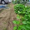 農作業と夏野菜の収穫中間集計