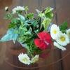 庭の 小菊と一輪のナデシコを 摘んできました