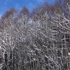 飛騨の冬景色【御母衣ダムvol1】