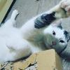 猫のおやつって種類が多いけど、皆さんはマストなおやつありますか?