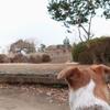 犬と一緒に、鎌倉の源氏山公園を抜けて化粧坂切通(けわいざかきりとおし)を下る。