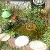 水生植物とメダカ達