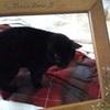 今日の黒猫