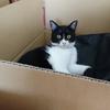 今日の黒猫モモ&白黒猫ナナの動画ー1036