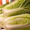 【白菜徹底解析!】栄養価、美容効果、種類、旬の時期、選び方、保存方法は??