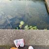 家族でハヤを釣って天ぷらで食すw