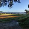 「秋の詩」の稲刈り