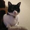 今日の黒猫モモ&白黒猫ナナの動画ー849