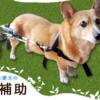 老犬・高齢犬を飼っている飼い主の方へ!老犬・高齢犬の介護用品、ペット用品販売【ペットベリー】をご紹介!