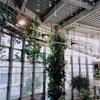 日本で1番小さい植物園 渋谷区ふれあい植物センターへ