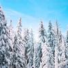 """映画""""Frozen 2""""見た?英語の勉強に応用する方法4つ!"""