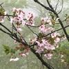 春のオススメゆるハイキング。花いっぱいの八重山