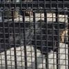 【熊本市動植物園】動物だけじゃない!ほかにもいろいろ楽しめます。(夏編)