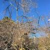 毎年3月に咲く🌸桜が昨日咲いた🌸🙄なぜだろう🤡
