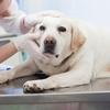 ペットの体調管理