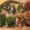 奈半利町から秋の野菜が届きました。