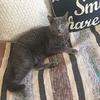 猫が糖尿病になってしまったら3〜動物病院の選び方・付き合い方について〜