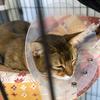 クウ、去勢手術を受ける(3):無事、手術が終わりました