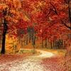睡眠の秋 今週のお題「○○の秋」