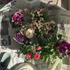 【ガーデニング】冬にも元気な花で寄せ植え〜今月のネイル