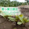 コマツナ・スイスチャード・チンゲンサイ~虫よけにはニラを植える~ベジヲタ畑 Day79~