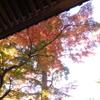 鎌倉散歩、東慶寺、浄智寺、寿福寺