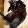 家猫にとっては家が全てです!