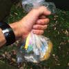 【鎌倉トレラン】トレイルのゴミ拾いを始めました