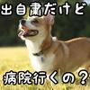 【緊急事態宣言】犬猫の予防接種はこうするべき~獣医師からのお願い~