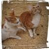 【籾殻と米ぬかの違い】………をテーマに子猫とノリツッコミしてみた💧⁉️
