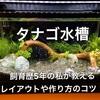 【タナゴの飼育に適した水槽とは】レイアウトや作り方のコツを紹介!