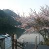 桜満開の亀山ダムでスタート