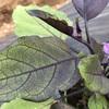 市民菜園で野菜づくりに挑戦!5