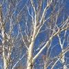 🌏#12 長野県佐久 〜日本一美しい白樺群生地周辺と八ヶ岳を望む温泉~