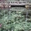 【お散歩岐阜】 モネの池
