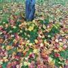 風の木施術メニューの変更 & 秋を楽しむこと