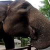 【18年ぶりのバリ島!9泊10日】⑪(6日目)ゾウの背中に乗せてもらおう!
