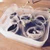 【水耕栽培】完全室内水耕栽培がうまくいかない