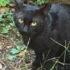【エムPの昨日夢叶(ゆめかな)】第1361回『大事件発生!3日目。2匹の子猫さんに仮の名前を命名してしまった夢叶なのだ!?』[11月9日]