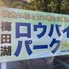 210119 梅田の蝋梅 (三分咲き?)