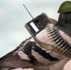 インドを騒がせた鳩スパイ事件