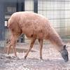 けものフレンズをきっかけにあらためて夢見ヶ崎動物公園に