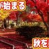 9月が終わり…10月が始まり…秋を感じることがある。