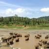 象の水浴び風景【スリランカの象の孤児園】
