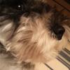 #いぬの肥満。愛犬がダイエット成功したポイント3つとは。